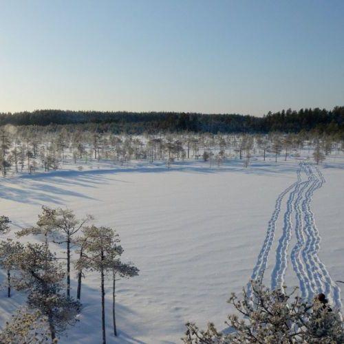 Lumikenkäjäljet lumessa
