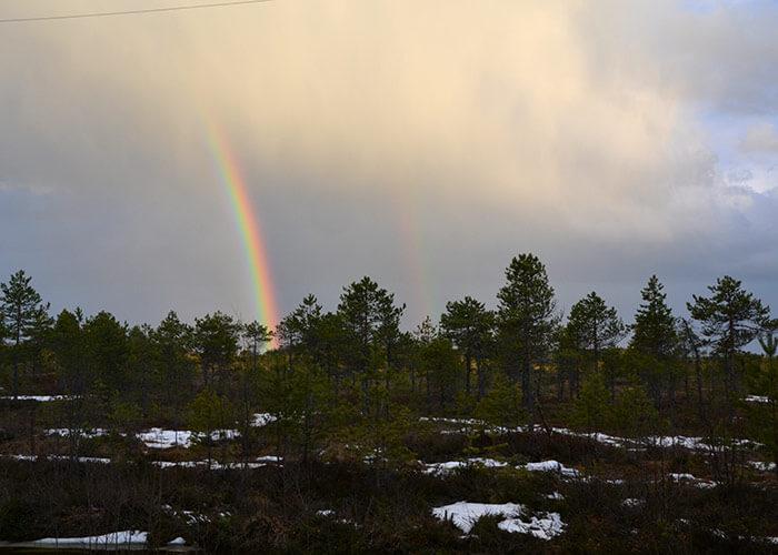 Sateenkaari Haapasuolla