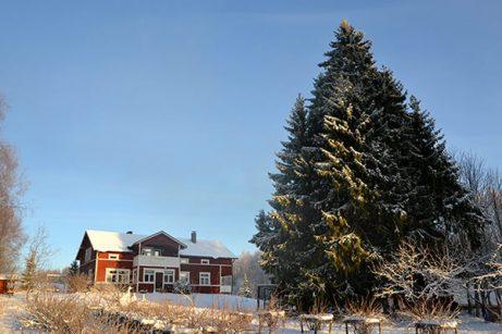 Koti ja kuusi talvella_pieni (1)